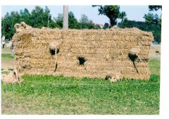 Strohpark_2002_003.jpg